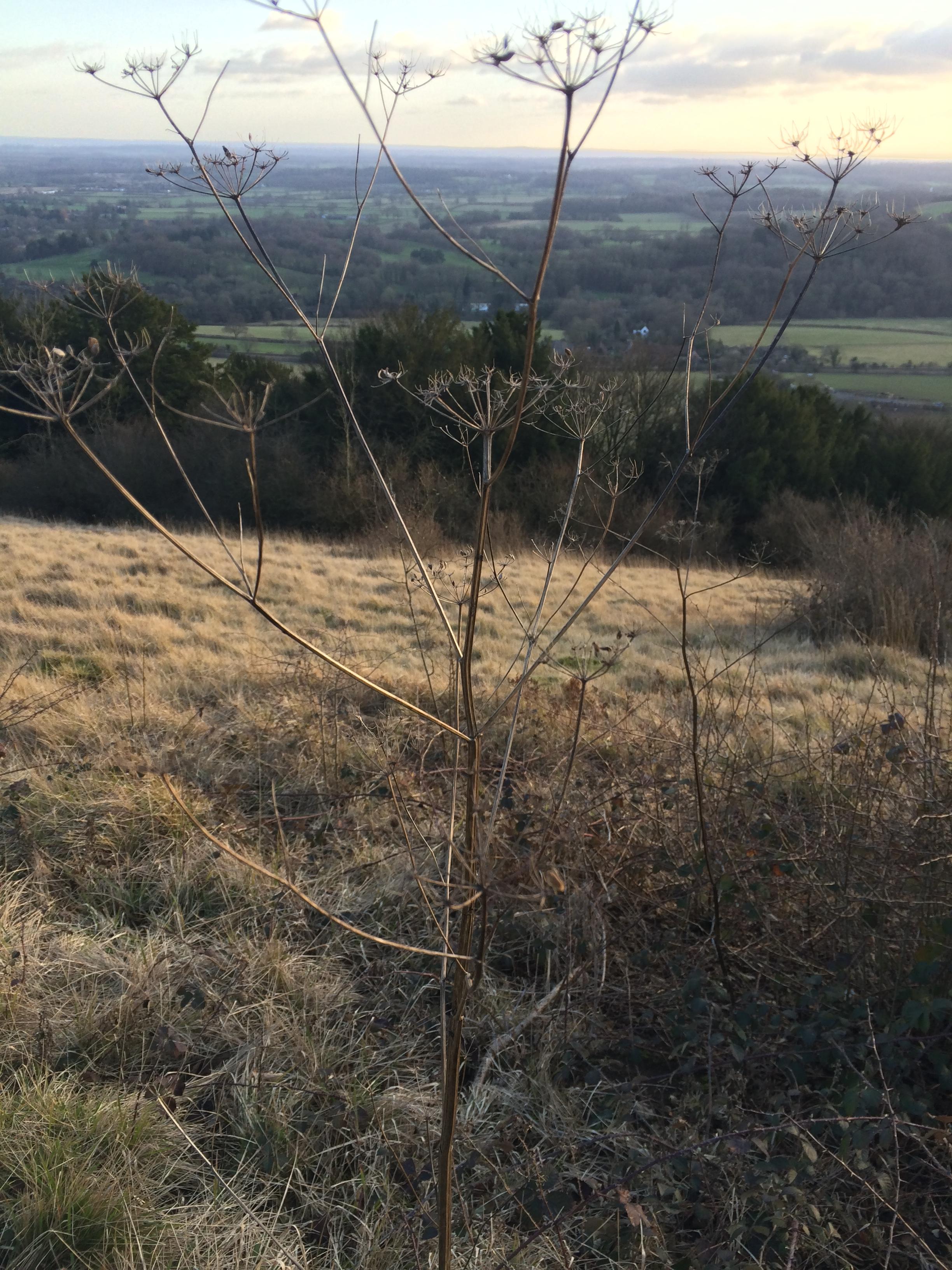 Box Hill 13