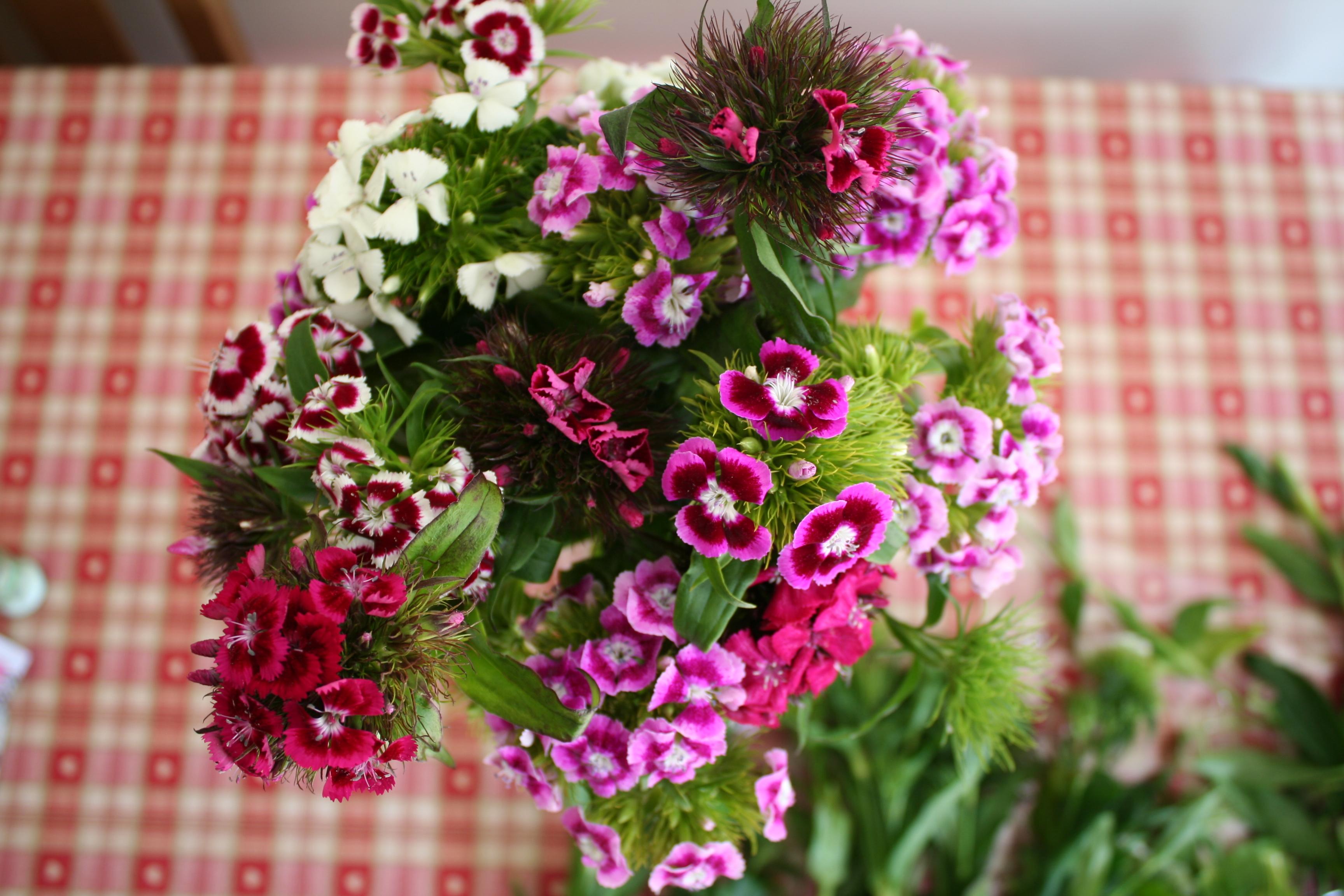 Flower 5